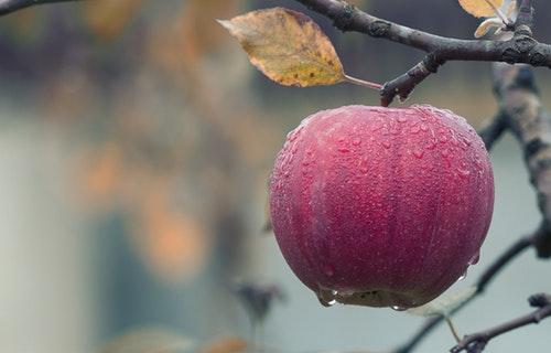 Fruticultores