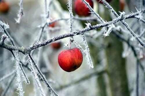 heladas de febrero