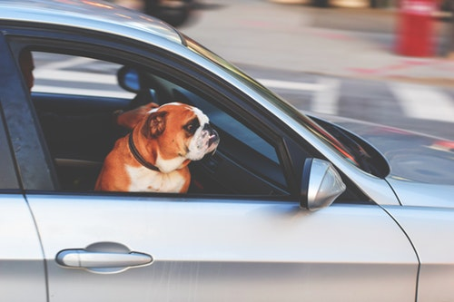 Mapfre mascotas noticias de seguros