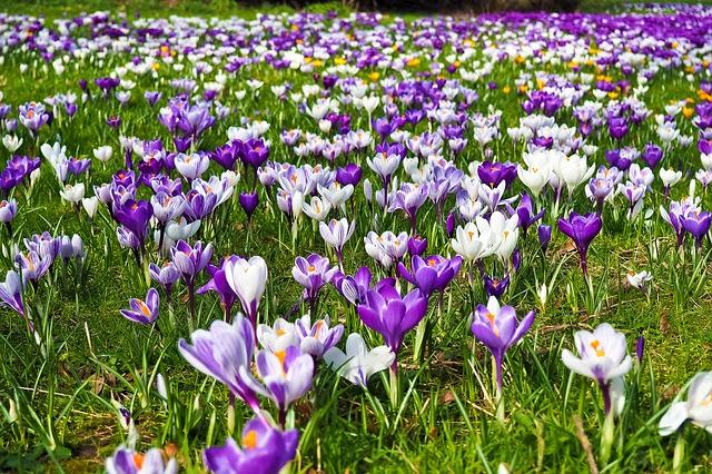 Cuando la primavera la sangre no altera