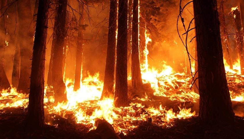 noticias de seguros daños medioambientales AIG