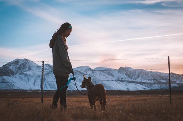 Mapfre y Snau se unen para comercializar seguros  para perros