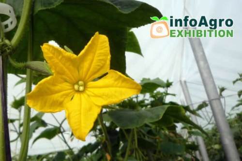 CESCE apoya y asesora a los exportadores en Infoagro