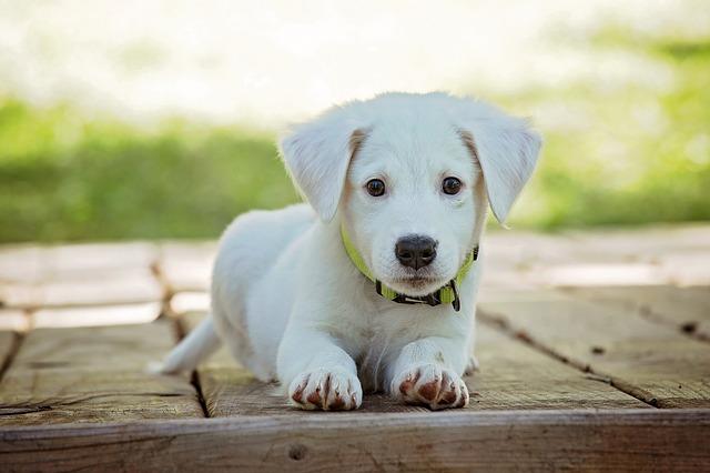 Los 5 aspectos que puedes proteger de tu mascota
