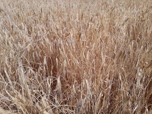 Agroseguro inicia el pago de las indemnizaciones por sequía