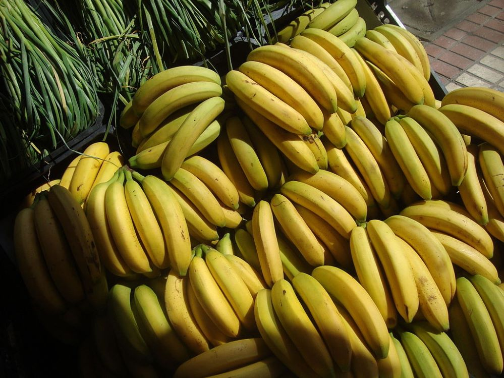 Agroseguro plátano de Canarias noticias de seguros