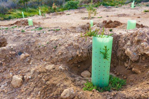ASISA Vida reforesta el norte de Granada. Noticias de seguros.