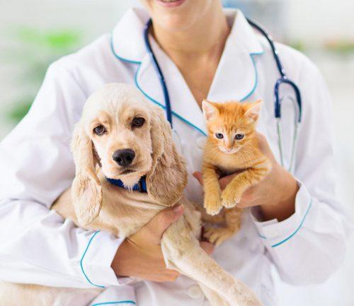 MGS lanza un seguro de mascotas. Noticias de seguros.