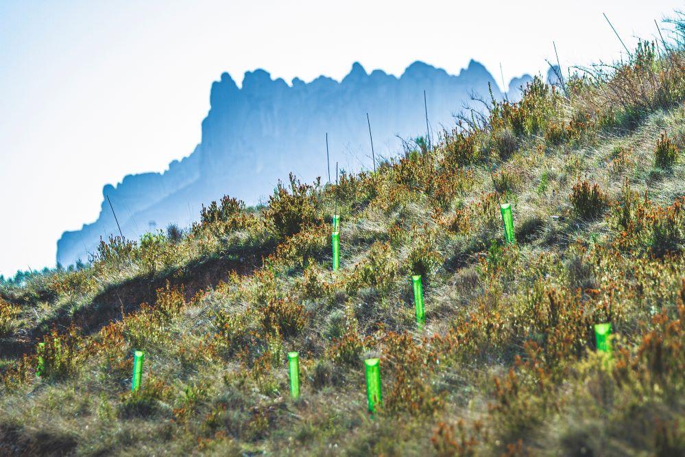 DKV compensa las emisiones de CO2 de los asistentes al Festival Cruïlla plantando 443 árboles.